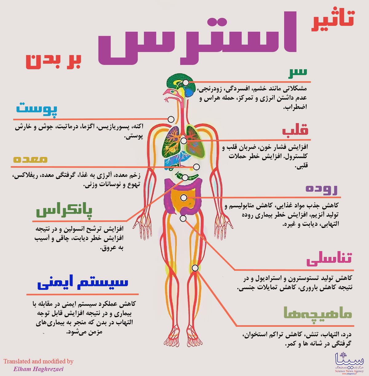 استرس چه بلایی بر سر بدن می آورد؟