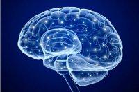 استروژن حافظه را تحت تاثیر قرار میدهد