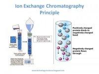 کروماتوگرافی تعویض یونی (IEC)