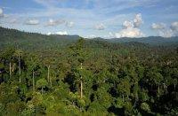کشف آنتیبیوتیک جدید در جنگلهای گرمسیری