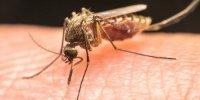 تولید واکسن جدید مالاریا با پروتئین ویروس قدیمی