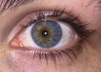 کشف پروتئینی که با نابینایی مرتبط است