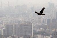 آلودگی هوا باعث چاقی و اضافه وزن میشود؟