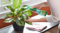 آیا گیاهان ناقل ویروس کرونا هستند؟