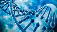ژنتیک علائم ابتلا به کووید۱۹ را تعیین می کند