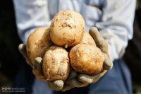 قدرت سیب زمینی در تقویت ماهیچه های زنان