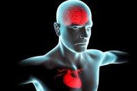 قلب سالم تر علامت مغز سالم تر در دوره سالمندی