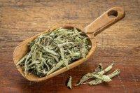 عصاره گیاه «استویا» موجب کاهش علائم بیماری کبد چرب می شود