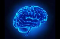 فعالیت جدید قدرت مغز را افزایش میدهد