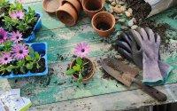 ۶ گیاهی که می توانید به راحتی در آپارتمان بکارید