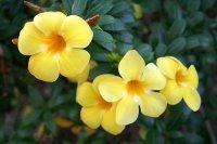 گیاهی معجزه گر برای دستگاه گوارش