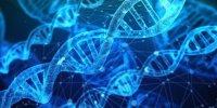 درک ارتباط میان سلولهای انسان با کمک ژنهای مصنوعی