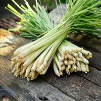 گیاهی موثر در تقویت سیستم ایمنی