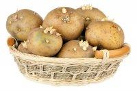 آیا غذا پختن با سیبزمینیهای جوانه زده خطری ندارد؟