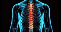 درمان آسیبهای نخاعی با ایمپلنت سلولهای بنیادی عصبی