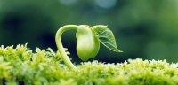 انقراض نسل انسان در صورت انقراض گیاهان