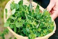 کنترل فشارخون بالا با خوردن این 6 گیاه جادویی!