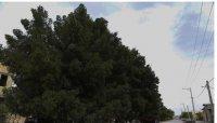 وجود درخت در خیابان ها ریسک افسردگی را کاهش می دهد