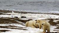 Arctic heatwave could result in summer_like warmth for Alaska