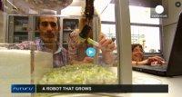 روبات هایی که ریشه می دوانند
