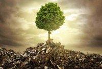 جنگ و محیط زیست