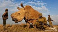 بشر مسیر تکامل جانوران را به کلی تغییر داده است